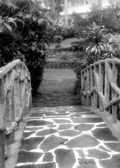 lots of nice scenic shots at this hotel in Cuernavaca, Mexico Cuernavaca Leading Lines Mexico Rails Beauty In Nature Black And White Photography Bridge Cobblestone Day Hotel Nature No People Outdoors Palm Tree Tree Walkway Wooden Railing