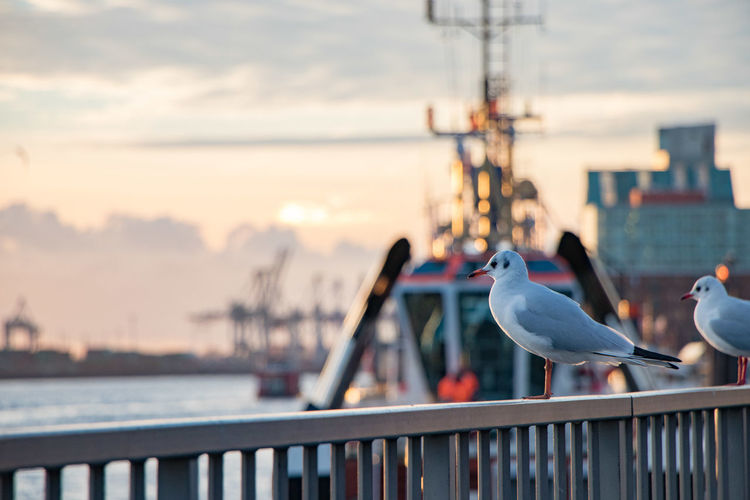 Close-up of birds perching on railing against sea