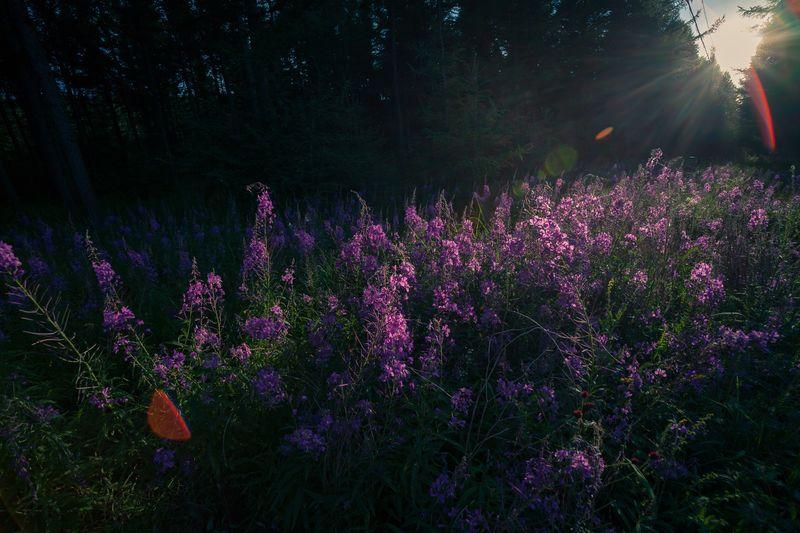 Purple crocus flowers on tree
