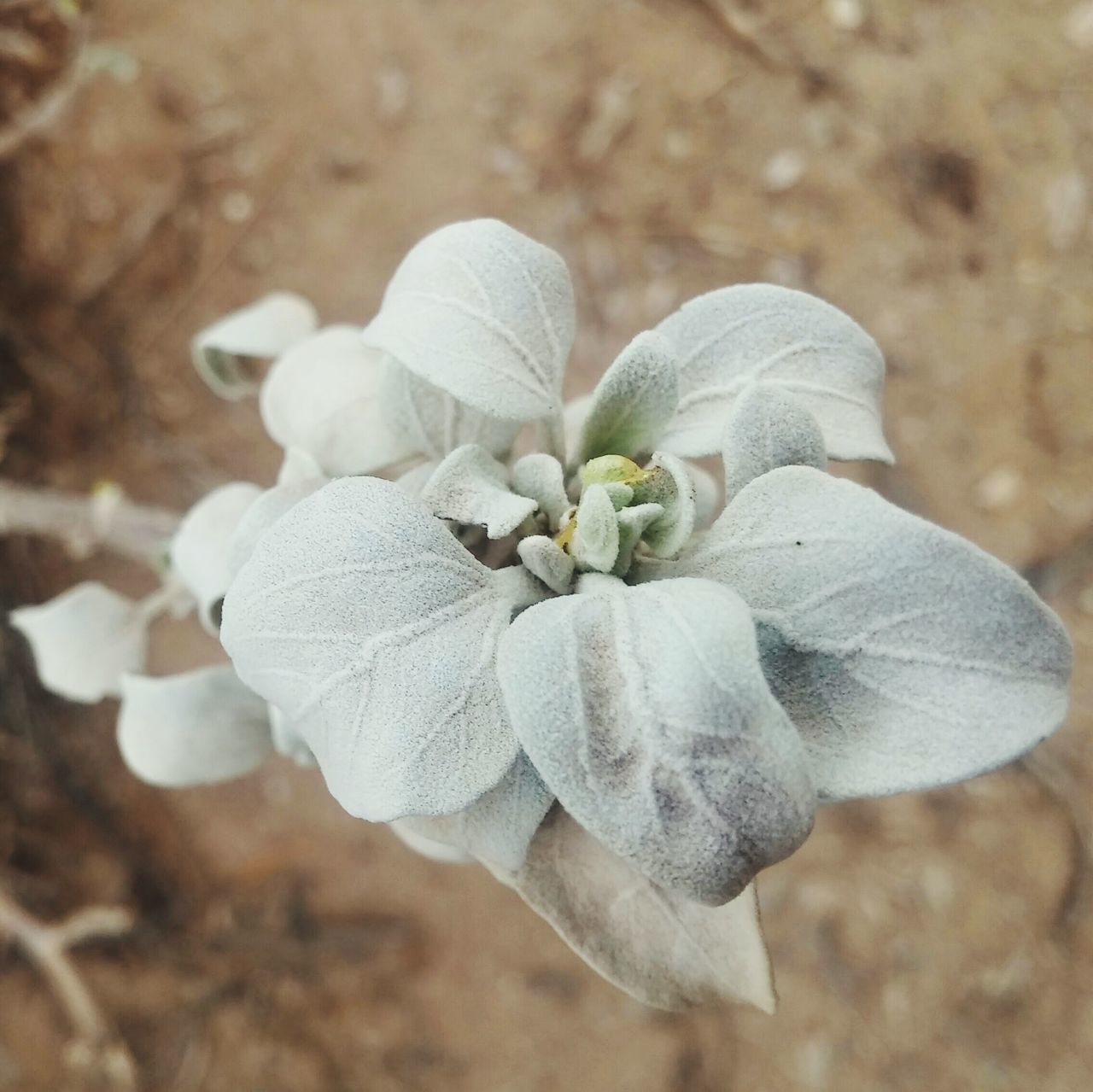 nature, flower, beauty in nature, plant, growth, petal, no people, close-up, fragility, blooming, flower head, day, outdoors, freshness