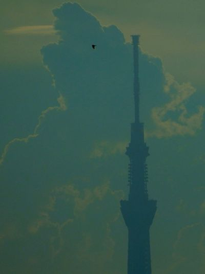 OLYMPUS SH-50 Tokyo Sky Tree Clouds And Sky Silhouette