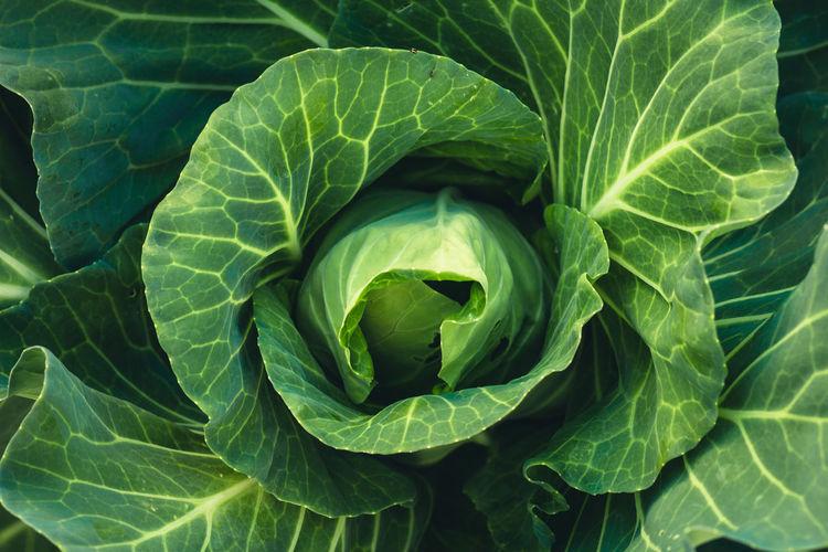 Full Frame Shot Of Vegetable