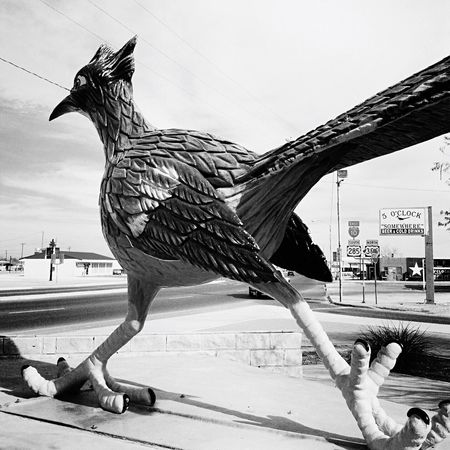 Bird Outdoors Animal Themes Day Sky No People Roadrunner Chapparal Sculpture Texas Texas Landscape