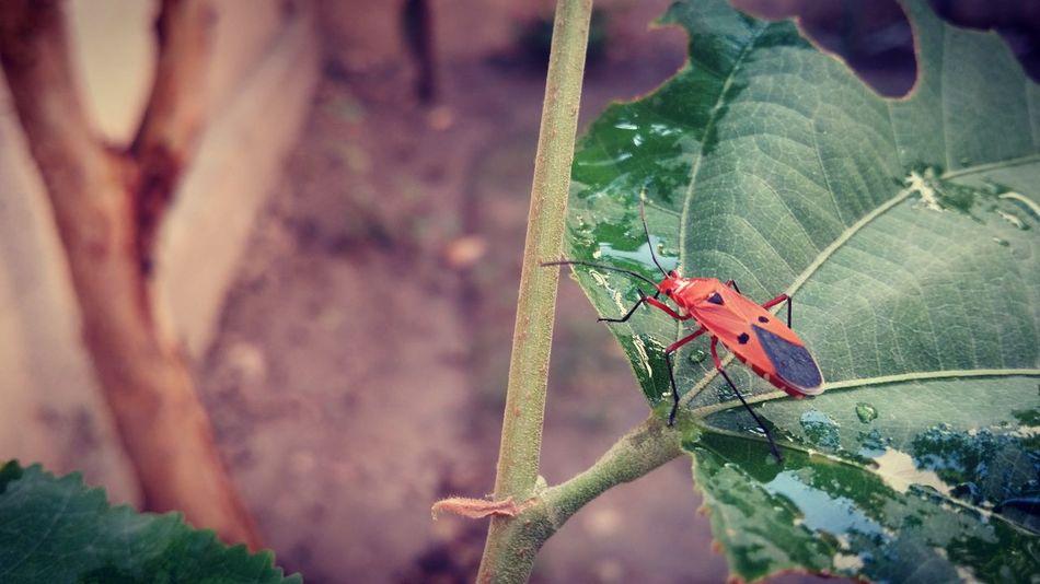 A bug's life. Bugslife Coloroflife