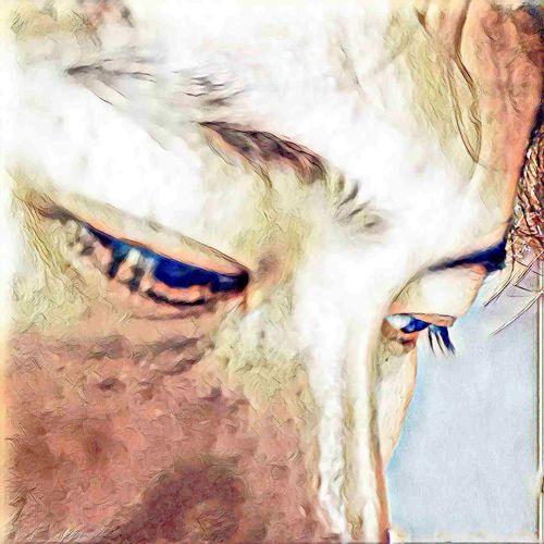 Last glimpse of Love and Lost Photographic Memory Portrait Paintings Color Palette Color Portrait EyeEm Best Shots Life It Is Capture The Moment Original Experiences Master_shots Memories
