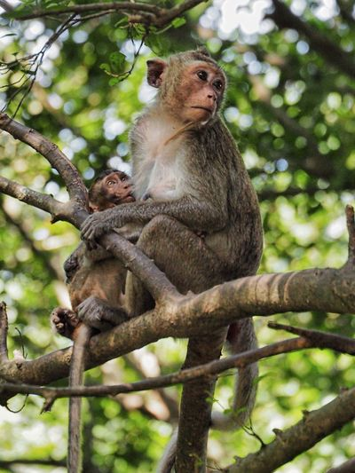 Animals In The Wild Monkey Nature