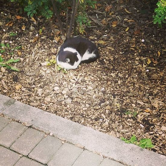 Рижский котик никого не намывает, потому что в Риге людей много. Он спокойно спит на одной из клумб в центре города. Сон его никто не тревожит. Даже туристы понижают тон, когда проходят мимо. рига Riga котикиспасутмир