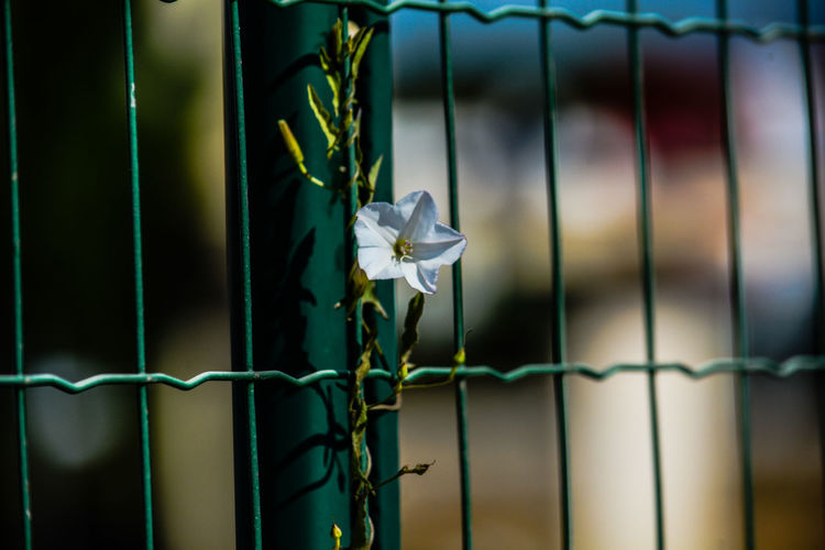 Close-up of flowering plant against fence