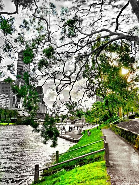 Wanderlust Tree Nature Day Sky Outdoors Australia Spring Melbourne City