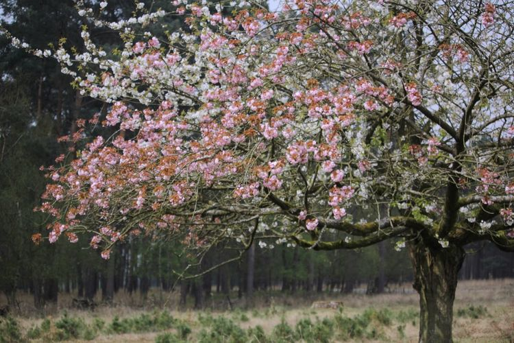 Tree Growth Nature Pink Color Outdoors Springtime Flower Beauty In Nature Grass No People Freshness Day