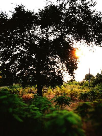 Tree Nature Growth Beauty In Nature Sunlight No People