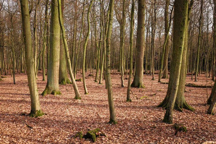 Trees growing on field in forest