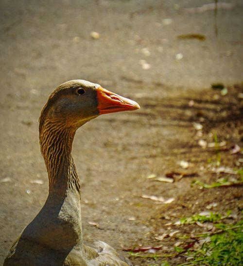 Birds Wildlife Sony A6000 Nature