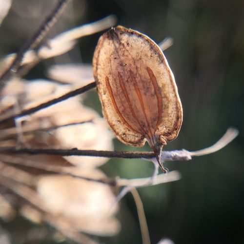 Nature Close-up No People Focus On Foreground Plant Brown Leaf Outdoors Day Fragility Dried Plant Maximum Closeness