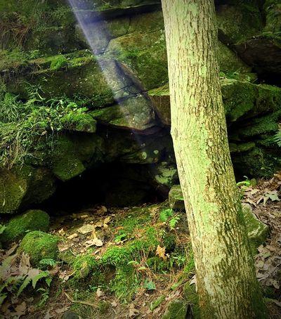 A wee Leprechauns house ☘ Leprechaun Rocks Moss Cave Rock House Green Green Color Emerald Rock Leprechaun House Leprechauns Rock Formation Rock Formations Sunray Sunrays Tree Trunk Colour Of Life