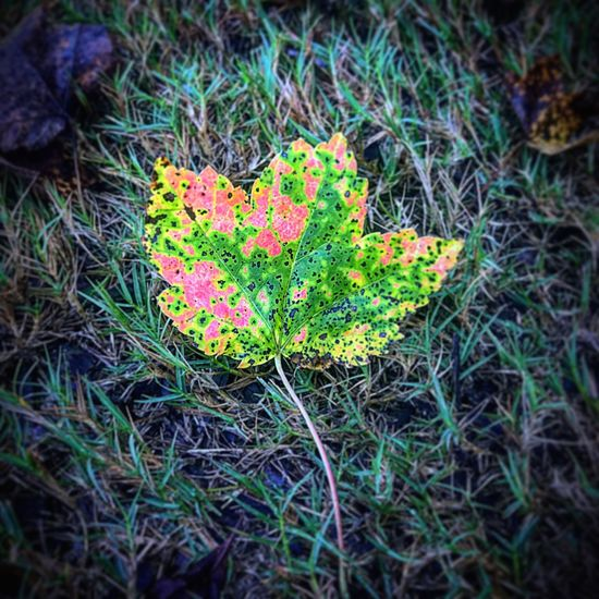 Beauty In Nature Outdoors Leaf High Angle View Freshness The Week On EyeEm Close-up Multi Colored Autumn Colors Autumn