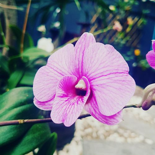 Just Be YourSelf Flower Pink Color Orchid Purple Passion Flower Beauty In Nature Close-up Nature Freshness Best Day Ever LoveFlower🌺 Natural Beauty Flowerlovers Smiling