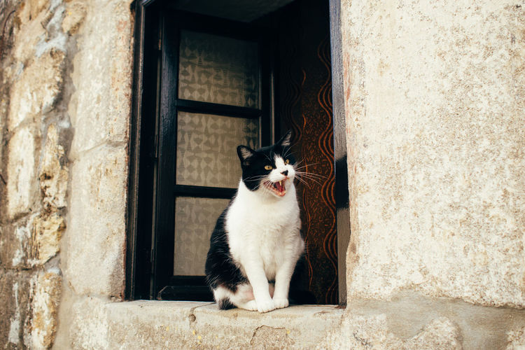Angry cat looking away while sitting on window sill