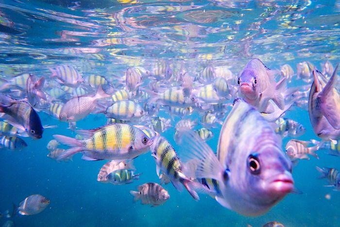 a school of fish Fish