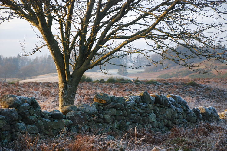 Gleneagles Beauty In Nature Day Frosty Mornings Landscape Nature No People Outdoors Rock - Object Roe Deer Scenics Sky Tranquility Tree