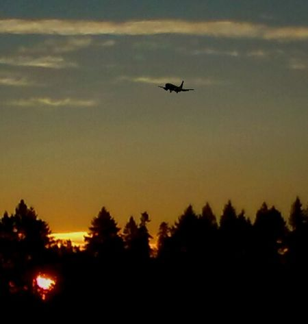Flying Silhouette Tree Airplane Air Vehicle Mid-air Transportation Journey Travel Nature Outdoors Commercial Airplane Aerospace Industry I LOVE PHOTOGRAPHY Golden Moments  Gold Colored Sunrise_Collection EyeEm Gallery Sunlight Getty Images I💜oregon I ❤Oregon Motion Nature Photos Official EyeEm © Morning Light