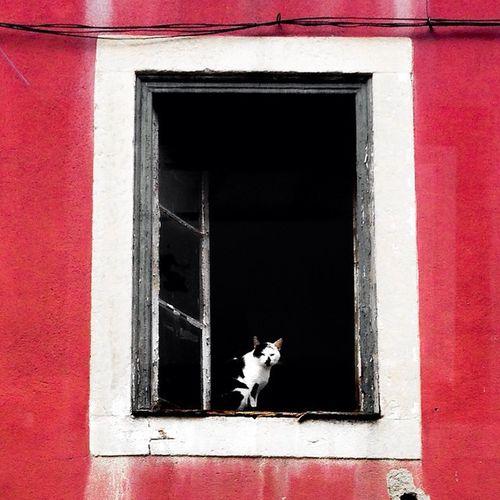 Eye candy !! 😍 Cat Window Windowporn EyeCandy  Lisboa Street Photography Igersoftheday Vscogood Eyemphotography Eyem Lisboa Eyecatcher Cats Lovers  Cats 🐱 Catsoftheworld Cats Catslover Catsoneyeem Taking Photos Cats Of EyeEm Catsonwindows EyeEm Gallery Streetphotography Colorful Streetphoto_color Lisboa Portugal