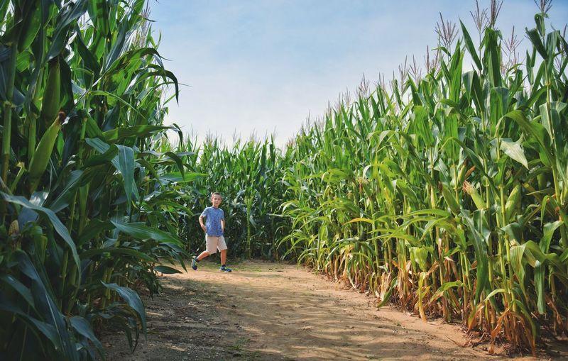 Full Length Of Boy Walking On Footpath Amidst Plants