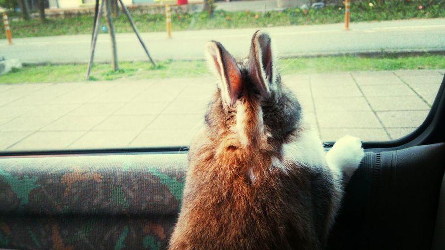 我家小夫 超厲害 當他一直看著窗外,看著看著,我發現他哭了!!但是我沒有~~