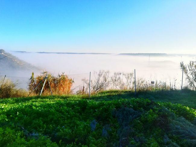 #foggy #town #grass #Nature  #green