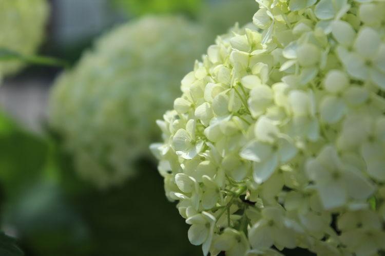 花 Flower Flowers,Plants & Garden Nature_collection EyeEm Nature Lover 花と庭