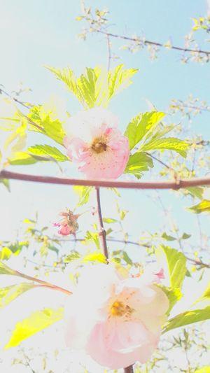 Undere Blumen😘 Blossom Flower First Eyeem Photo