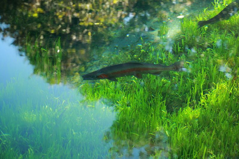 EyeEm Nature Lover Water Light And Shadow Nature_collection Water_collection Water Reflections Fish Waterweed Glitch