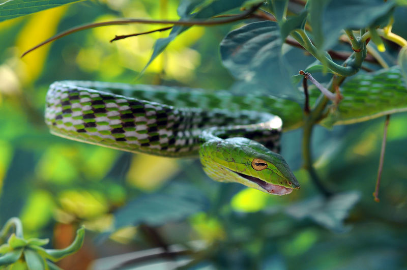 Close-up of snake on tree