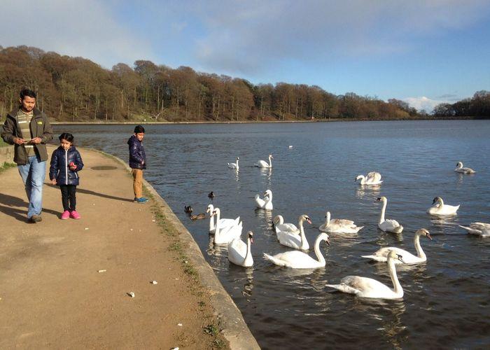Swan Lake Adam Miah Amelia Miah