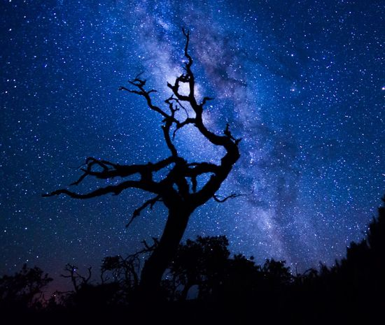 Astronomy Bare Tree Beauty In Nature Constellation Galactic Center Galactic Core Galaxy Infinity Low Angle View Majestic Milkyway Night Outdoors Scenics Space Star - Space Star Field Tranquil Scene Tranquility Tree