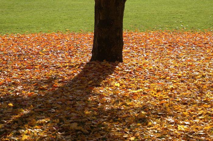 Kurpark Bad Homburg Autumn Autumn 2015 Autumn Atmosphere Autumn Collection Autumn Colors Autumn In Forest Autumn Leaves Colours Of Autumn Goldener Herbst Goldener Oktober Herbst Herbstblätter Herbstfarben Herbststimmung