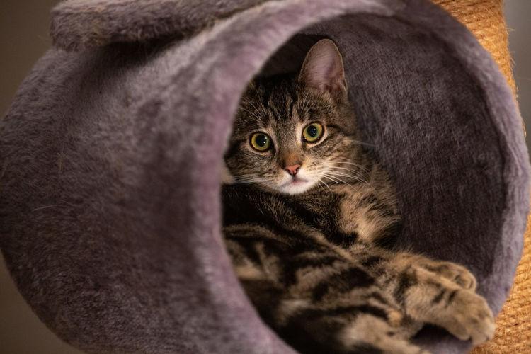 Cat in a cat