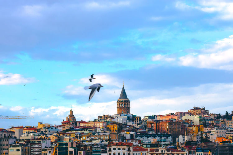 Galata tower and seagull