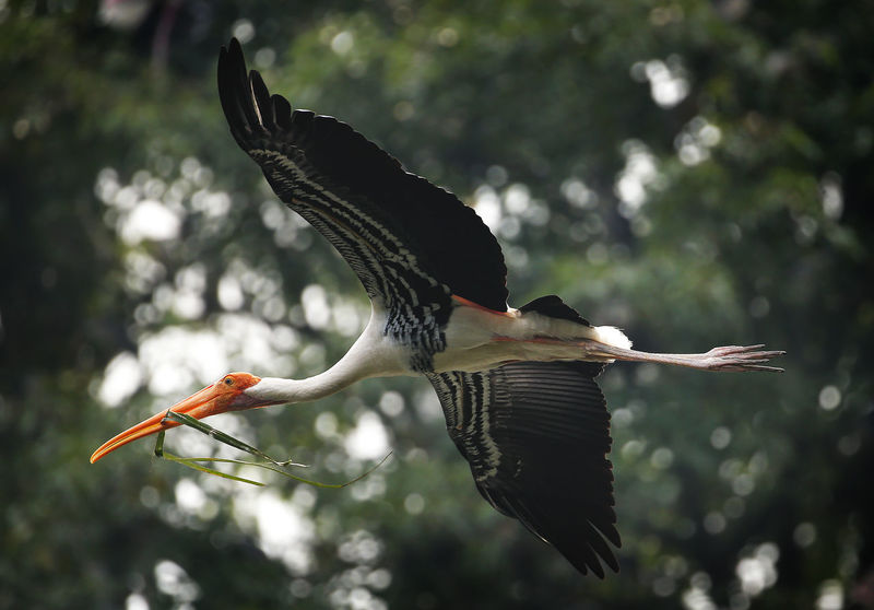 Animal Animal Themes Animal Wildlife Animals In The Wild Beak Bird Day Flying Focus On Foreground Low Angle View Mid-air Motion Nature No People One Animal Outdoors Plant Spread Wings Tree Vertebrate