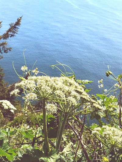 High angle view of flowering plants by sea