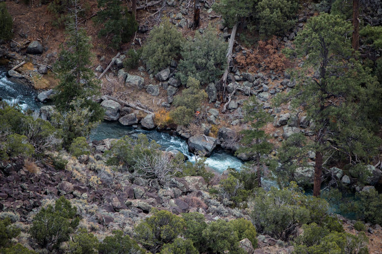 Shot down of the Red River from the La Junta area north of Taos, NM Green Color Taos New Mexico Beauty In Nature Blue Day Nature No People Outdoors Plant River Riverbank Rock - Object Rock Face Scenics Tree Water