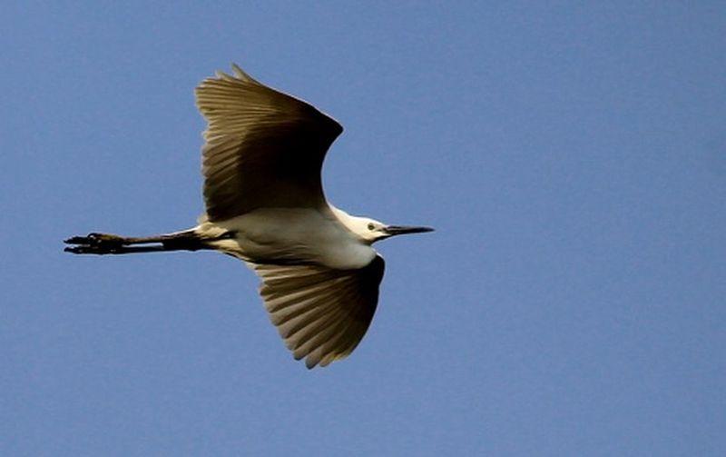 Flight.... Bird