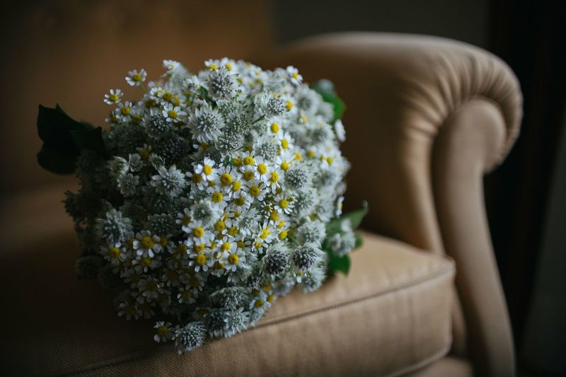 Flower Indoors  Close-up Bouquet Freshness Nature One Woman Only Wedding Wedding Flower Wedding Flower Bouquet Wedding Floral Daisy Flower Country Flowers Fresh On Market 2017