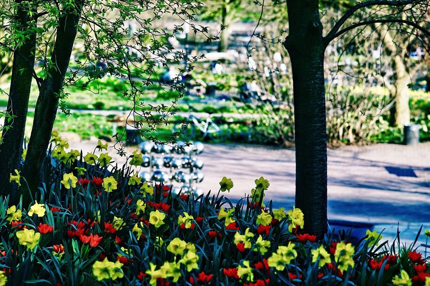 City Park Citypark Planten Un Blomen Plant Growth Flowering Plant Flower Beauty In Nature Freshness No People Nature Day Fragility Vulnerability  Green Color Park Tree Tranquility Outdoors Sunlight Focus On Foreground Flower Head Park - Man Made Space
