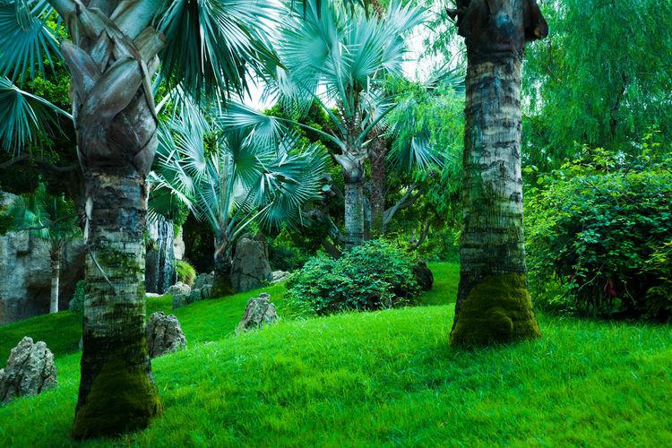 Jungle in the