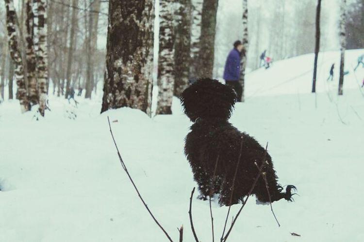 Dog Love Dog My Dog <3 I Love My Pet Chapa AnimaLs <3