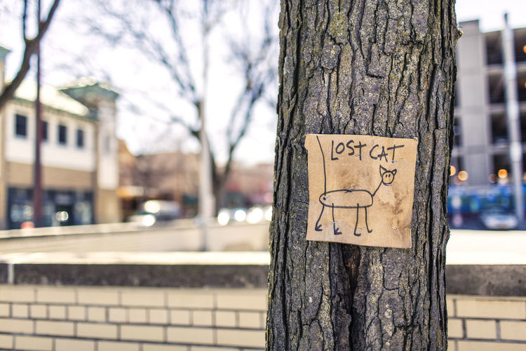 I was just walking around i saw this :)Focus On Foreground City Outdoors Building Exterior Close-up Day Tree No People Architecture Sky DSLR Photography EyeEm Best Shots EyeEm Vision EyeEmNewHere Adapted To The City Tree Cat Adapted To The City EyeEmNewHere