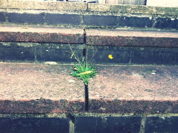 Beautiful, Like flowers growing on the street. Because it doesn't know it's not supposed to grow there. Flowers Streetphotography Poems Bored