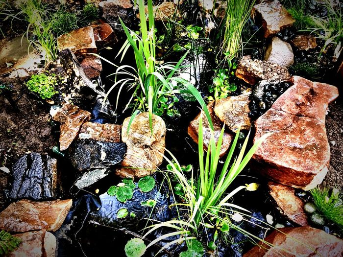Nature Mushroom Fungus Toadstool Growth Outdoors No People Beauty In Nature High Angle View Day Forest Leaf Plant Moss Fly Agaric Close-up Fragility Freshness Garden Green Green Green!  Tranquility Garden Photography Rock Photography Rock - Object Plants
