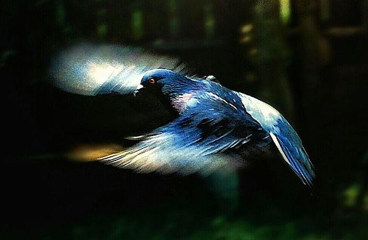 Old High School film shot. Nature EyeEm Nature Lover Bird Photography Putabirdonit Film EyeEm Birds Birds Of EyeEm  Capturing Movement Capture The Moment